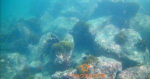 沖ノ島 海中 チョウチョウウオ
