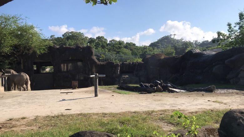台北市立動物園の象